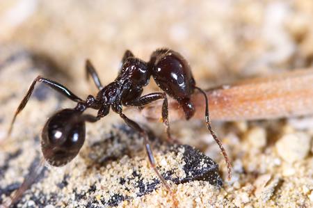 Ant Identification